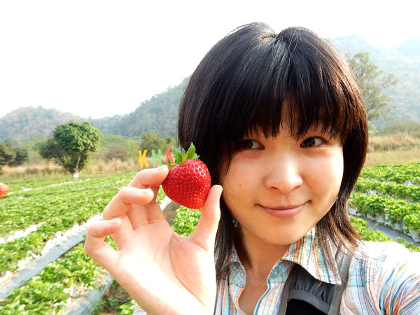 【2018年】カオヤイいちご農園は今が最盛期!今年から無農薬野菜も