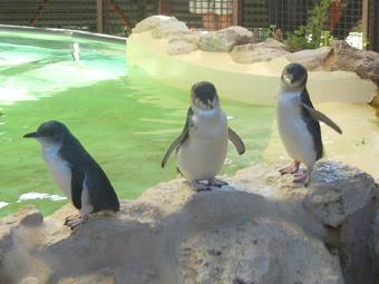 ペンギン島はカモメ島だった!? ショーのペンギンが超カワイイ~☆
