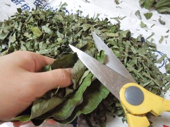 柿の葉茶を作る