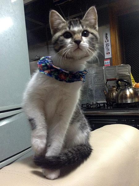 うちのネコが自由すぎる 子猫からオヤジに!? 動画あり