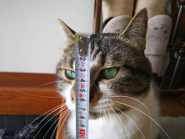 猫の身体測定☆体の長さ、前足、耳、顔、しっぽ、体重を測定したニャ