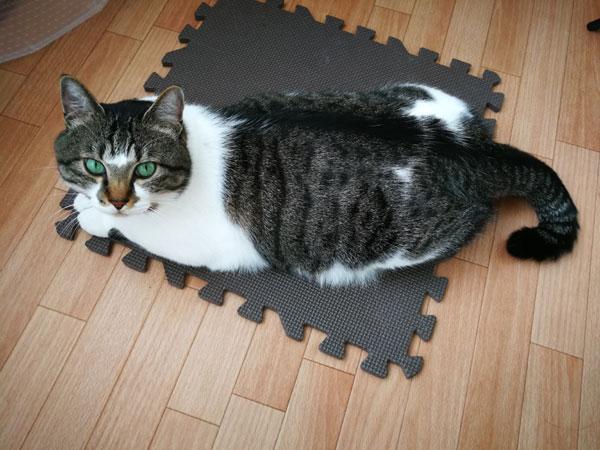 猫の爪とぎ、ジョイントマットを置いたら家が少しだけ平和になった
