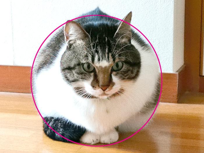まるでボール!? 猫がこんなに丸いなんて!笑