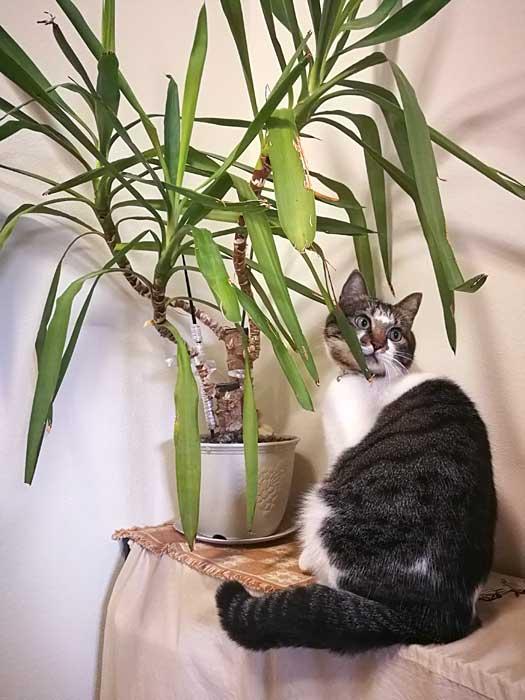 猫が観葉植物を食べる