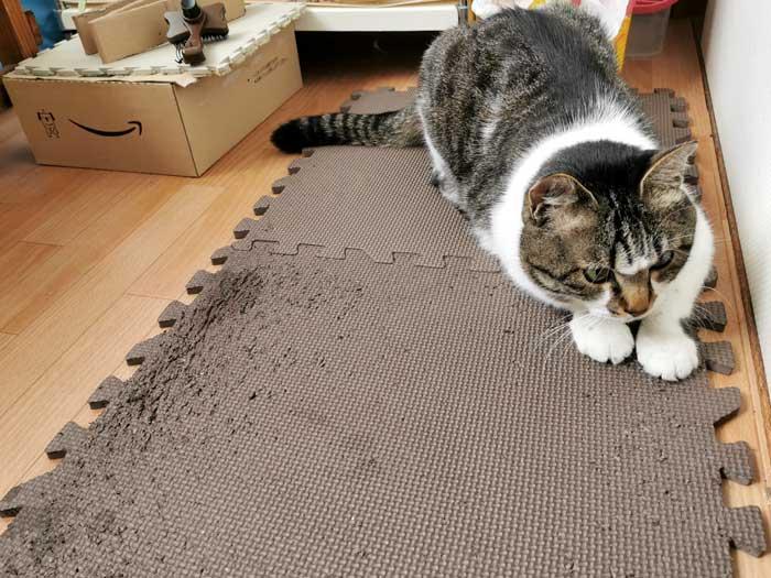 猫の爪とぎ☆ジョイントマットとアロマで、もっと家が平和になった