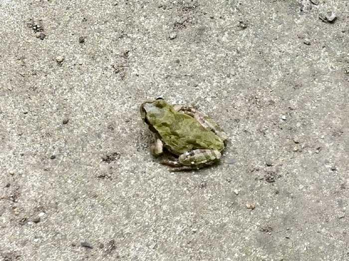蛙がカワイイ