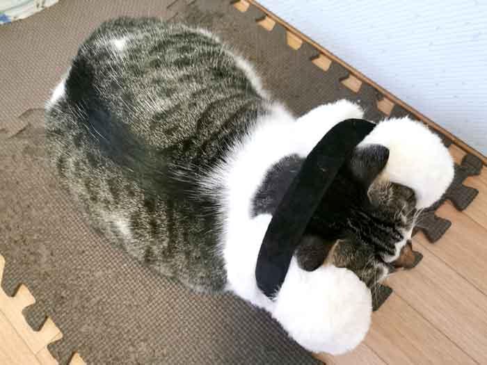 猫にイヤーマフ