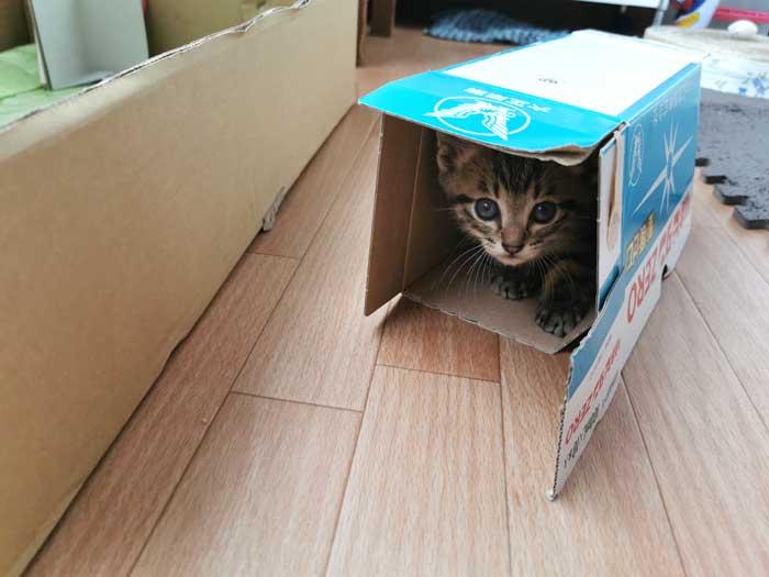 子猫が家にやってきた!