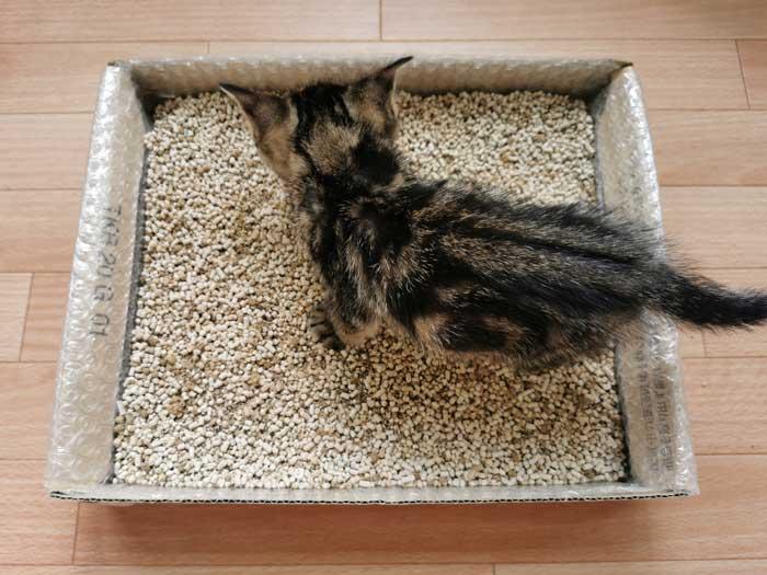 手作り子猫のトイレ