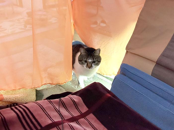テントに猫