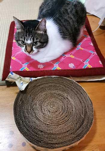 手作りの爪研ぎに猫大喜び