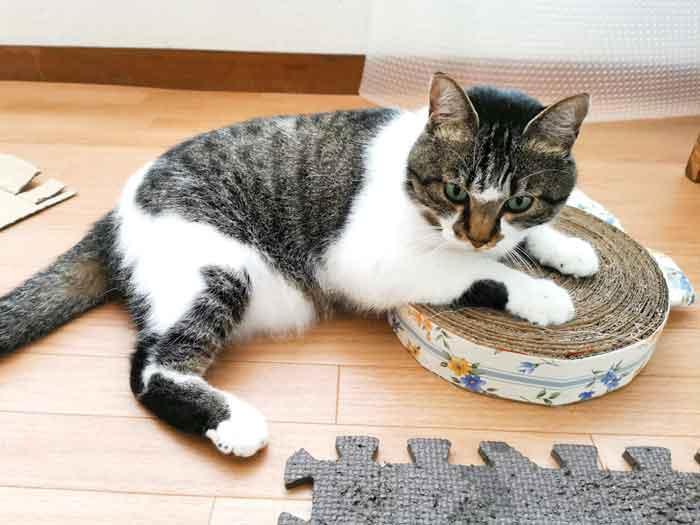 ダンボールを細く切って丸めて「猫の爪研ぎ」を作ったら、猫大喜び☆