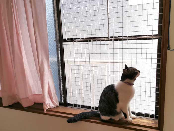 材料2つ☆猫が窓から脱走するので、ワイヤーネットを窓に取り付け