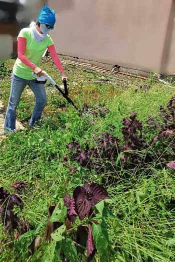 充電式草刈り機で2畳ほどの畑の草を刈ったけど、結構大変だった