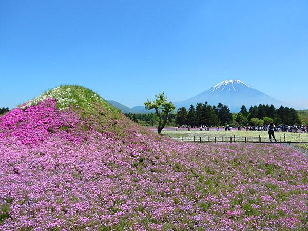 富士山を見に東京から河口湖へ日帰り観光