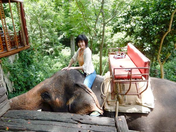 カオヤイで象乗り体験 森の中を通り、川の中も歩く 象の操縦も!?