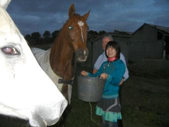 メルボルンの休日 日曜マーケット、ダンスパーティ、馬のえさやり
