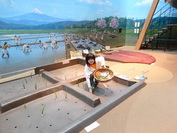 1泊2日、静岡でイベントついでに登呂遺跡など
